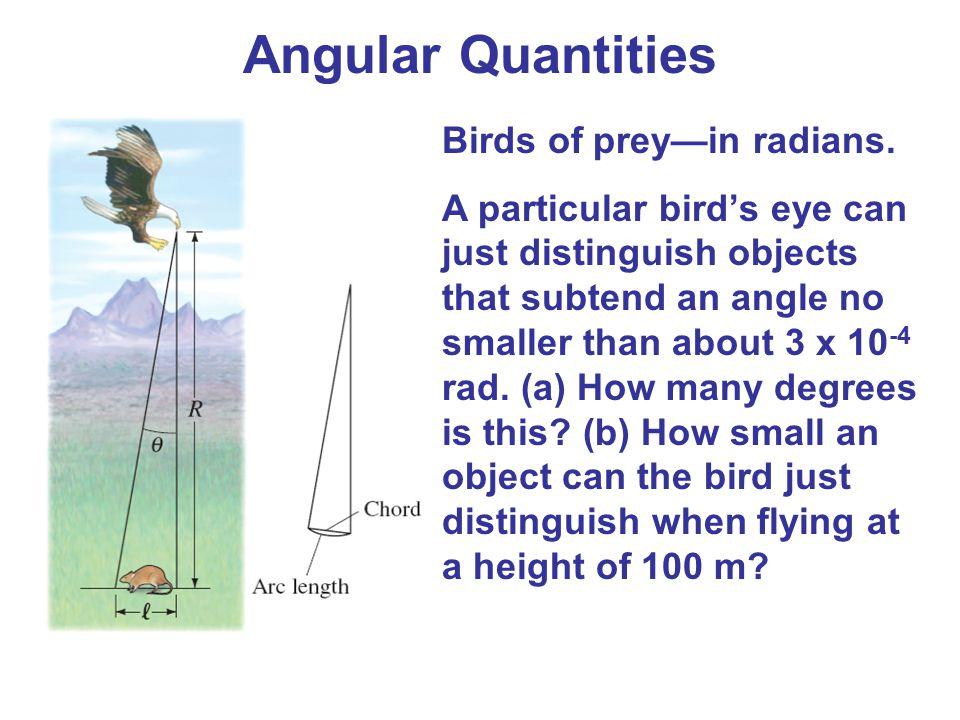 Angular Quantities Birds of prey—in radians.