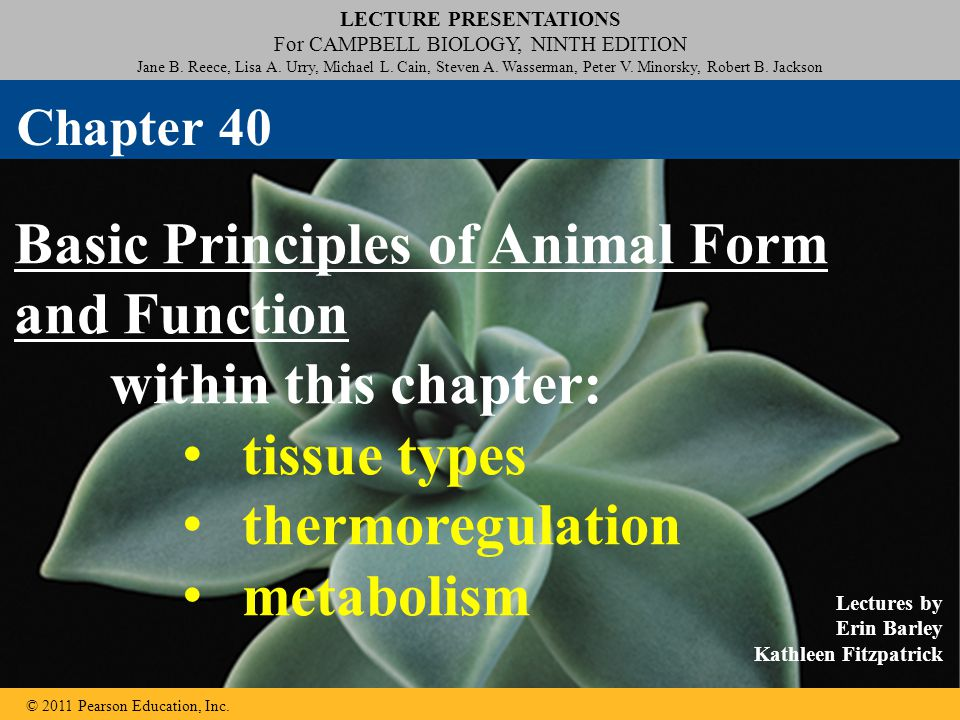 Basic Principles of Animal Form and Function within this chapter: