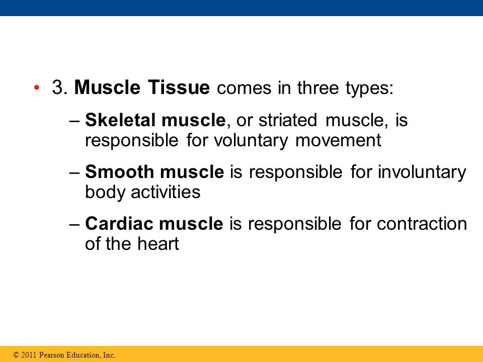 3. Muscle Tissue comes in three types: