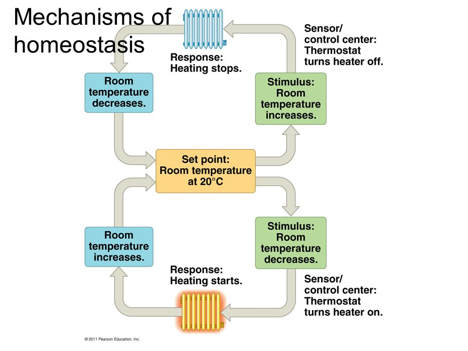 Mechanisms of homeostasis