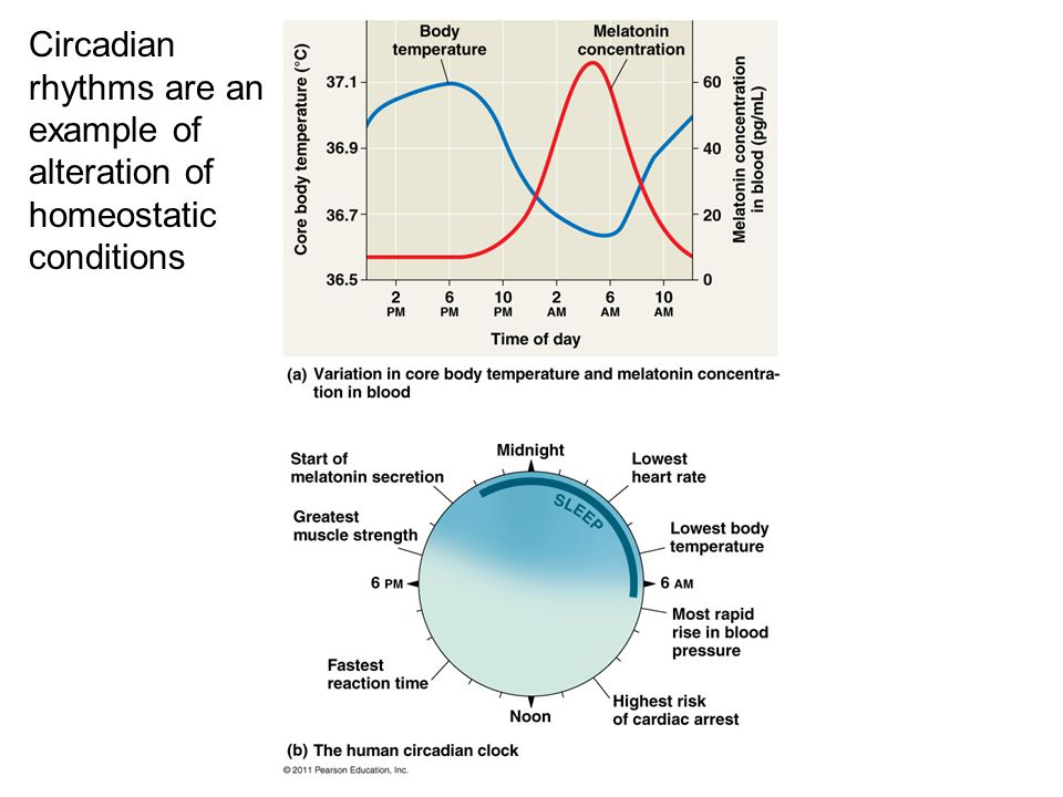 Circadian rhythms are an example of alteration of homeostatic conditions