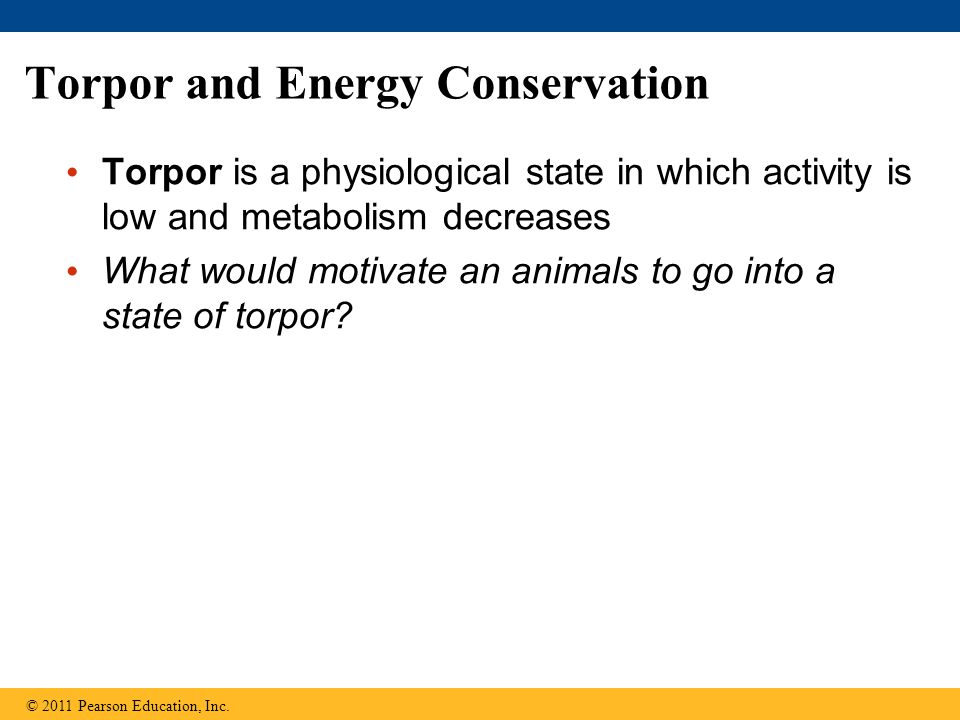 Torpor and Energy Conservation