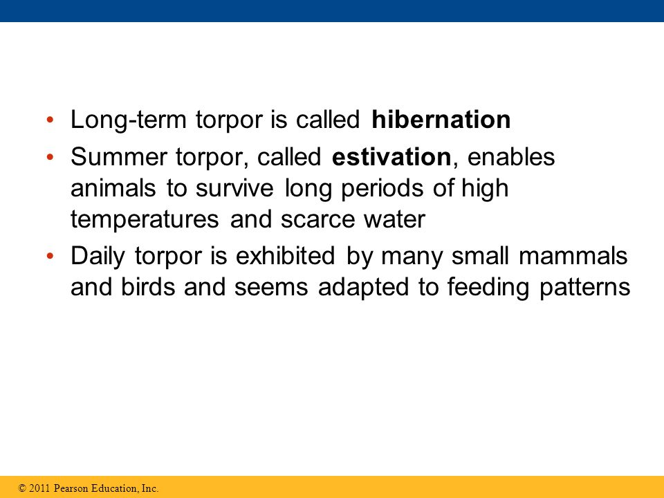 Long-term torpor is called hibernation