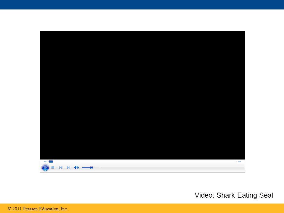 Video: Shark Eating Seal