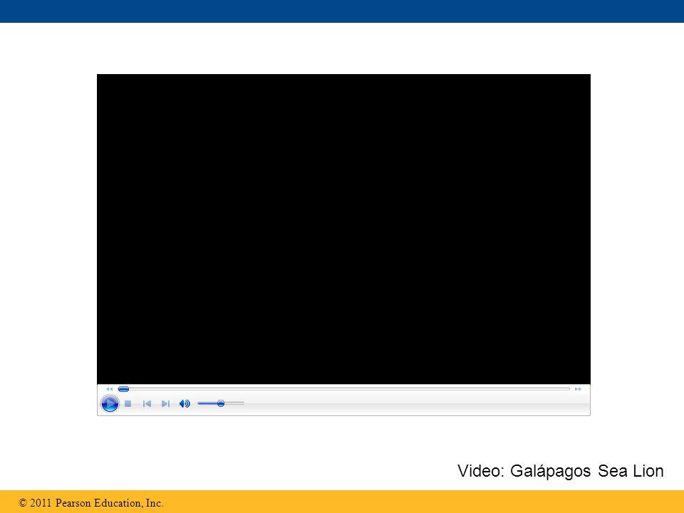Video: Galápagos Sea Lion