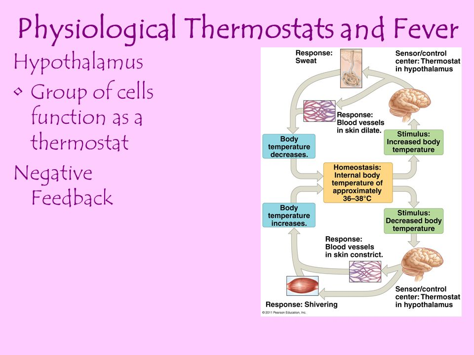 Physiological Thermostats and Fever