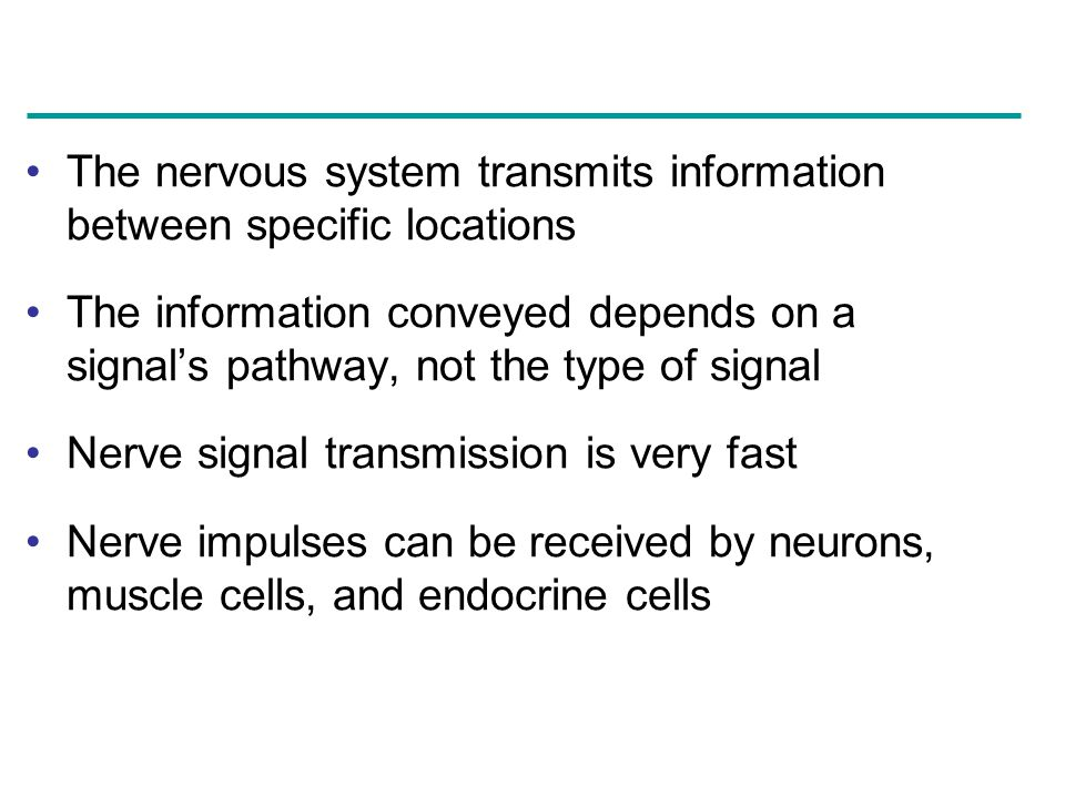 The nervous system transmits information between specific locations