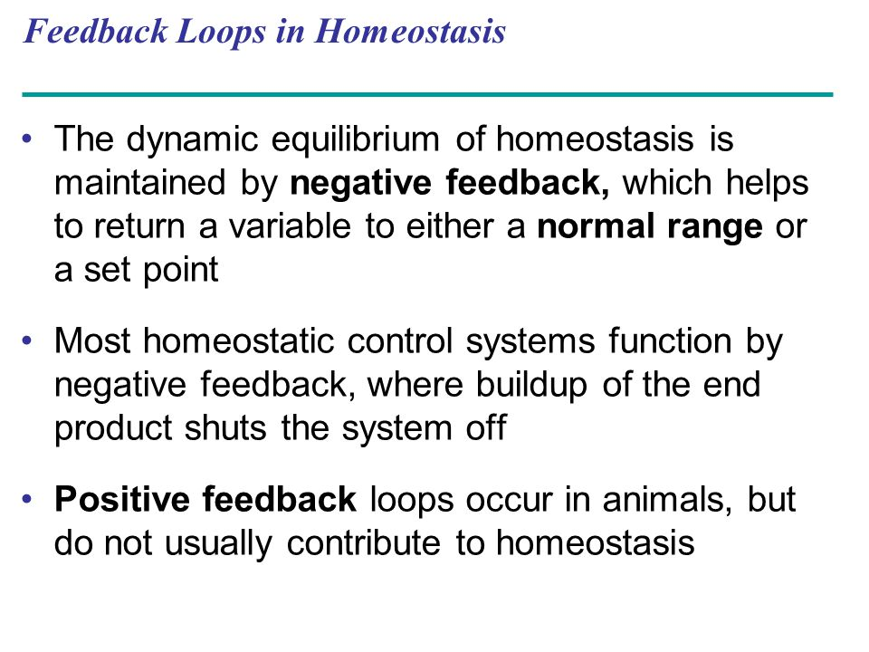 Feedback Loops in Homeostasis