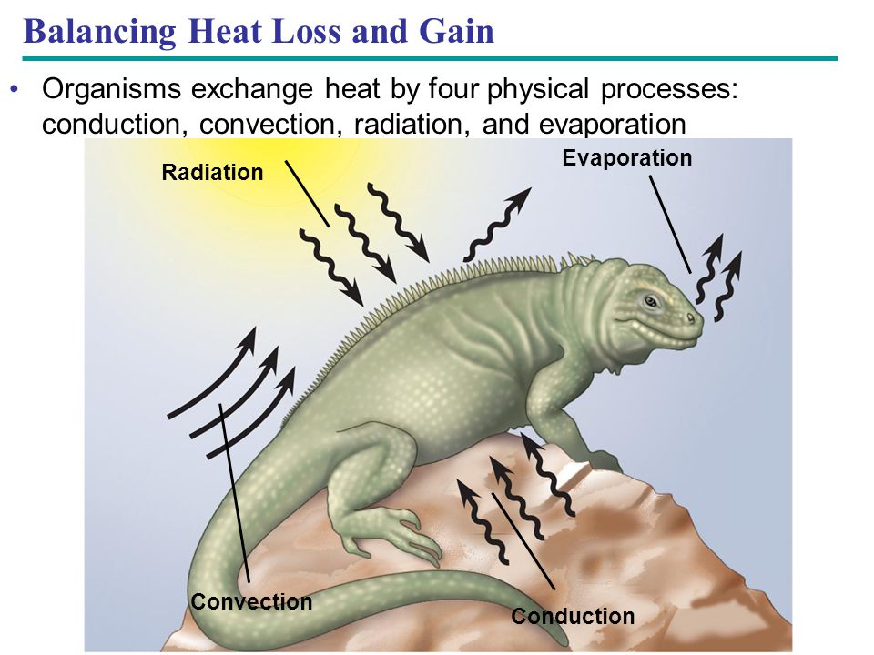 Balancing Heat Loss and Gain
