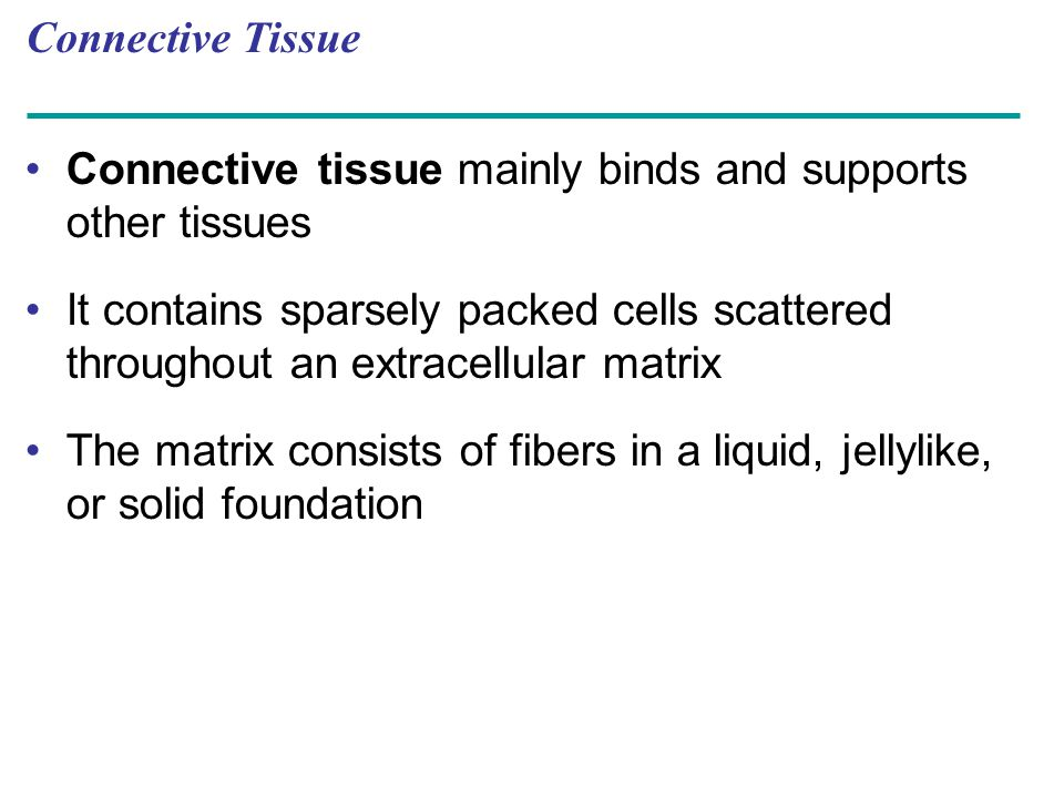 Connective Tissue Connective tissue mainly binds and supports other tissues.