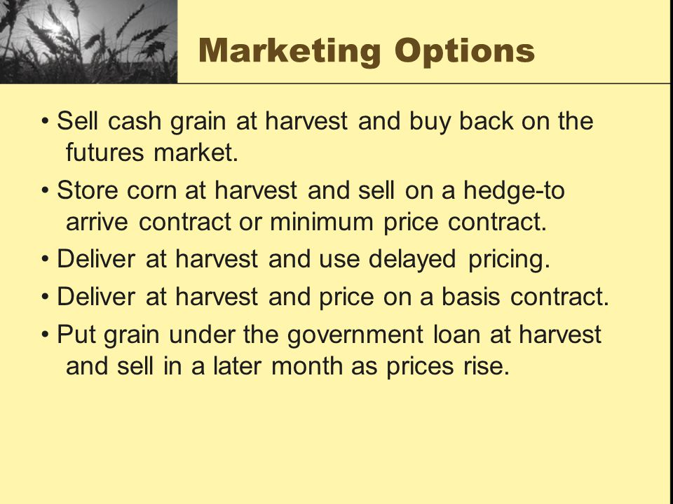 Marketing Options • Sell cash grain at harvest and buy back on the futures market.