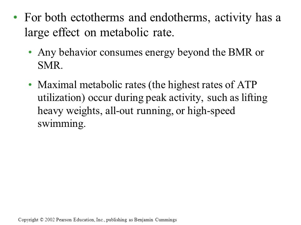 For both ectotherms and endotherms, activity has a large effect on metabolic rate.