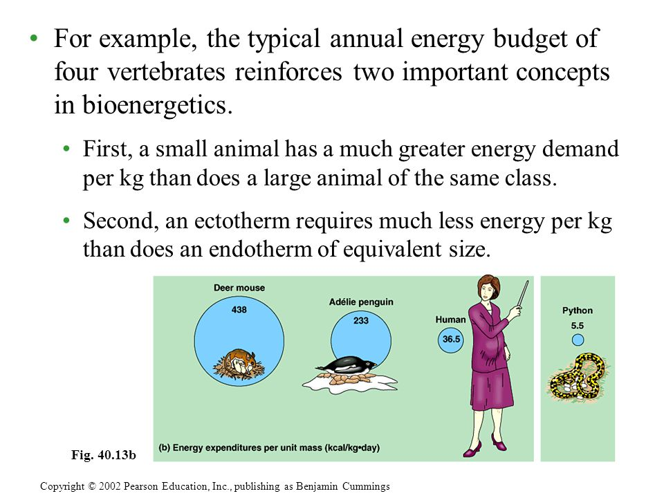 For example, the typical annual energy budget of four vertebrates reinforces two important concepts in bioenergetics.