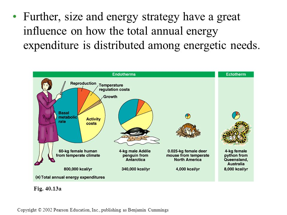 Further, size and energy strategy have a great influence on how the total annual energy expenditure is distributed among energetic needs.