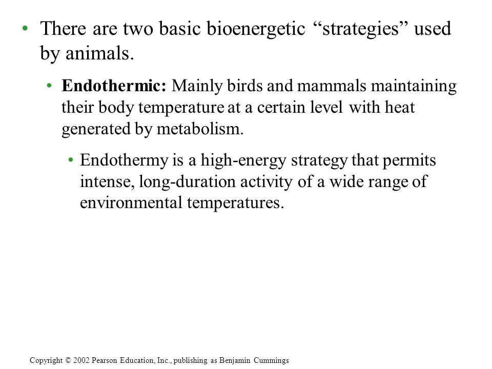 There are two basic bioenergetic strategies used by animals.