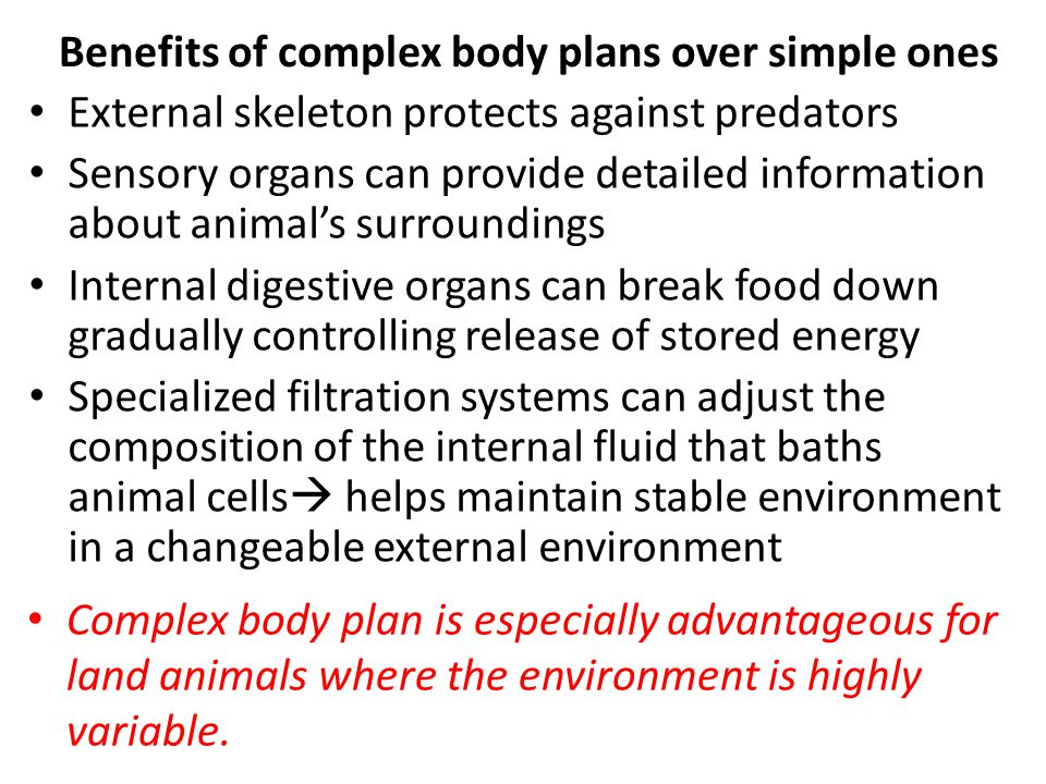 Benefits of complex body plans over simple ones