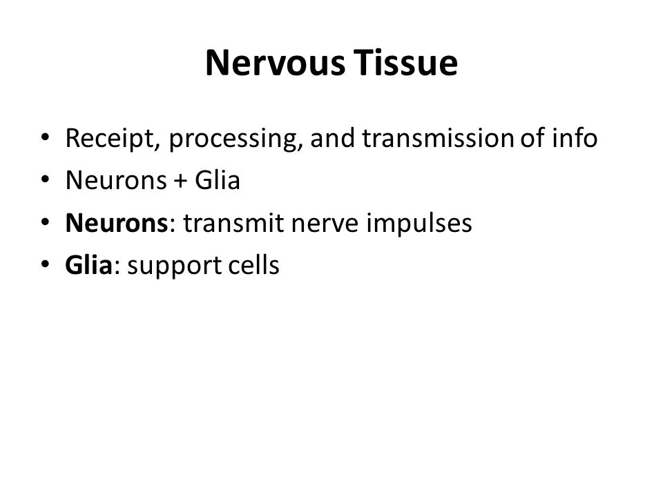Nervous Tissue Receipt, processing, and transmission of info