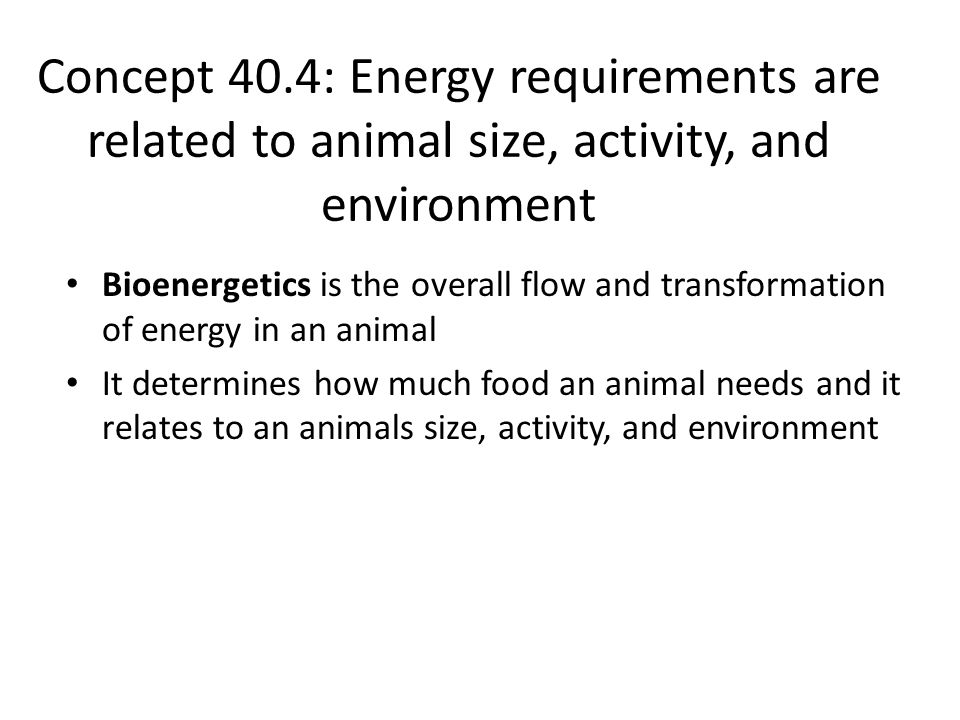 Concept 40.4: Energy requirements are related to animal size, activity, and environment