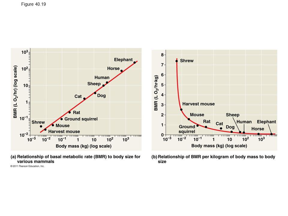 Figure 40.19 The relationship of metabolic rate to body size.