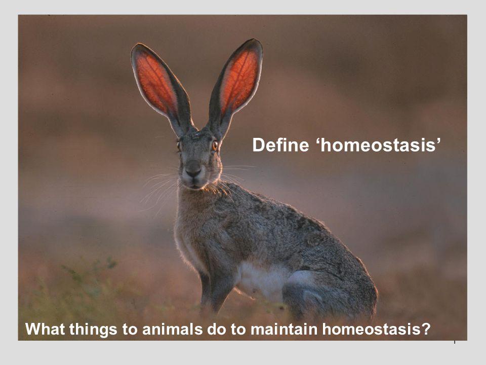 Define 'homeostasis' What things to animals do to maintain homeostasis