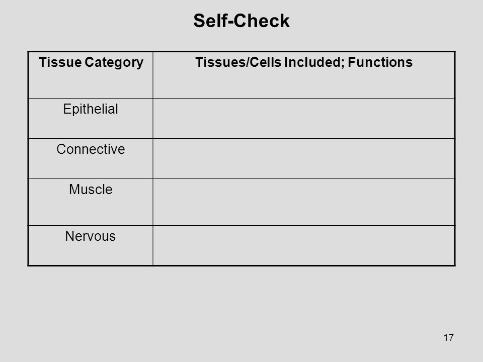 Tissues/Cells Included; Functions