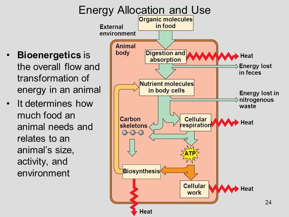 Energy Allocation and Use