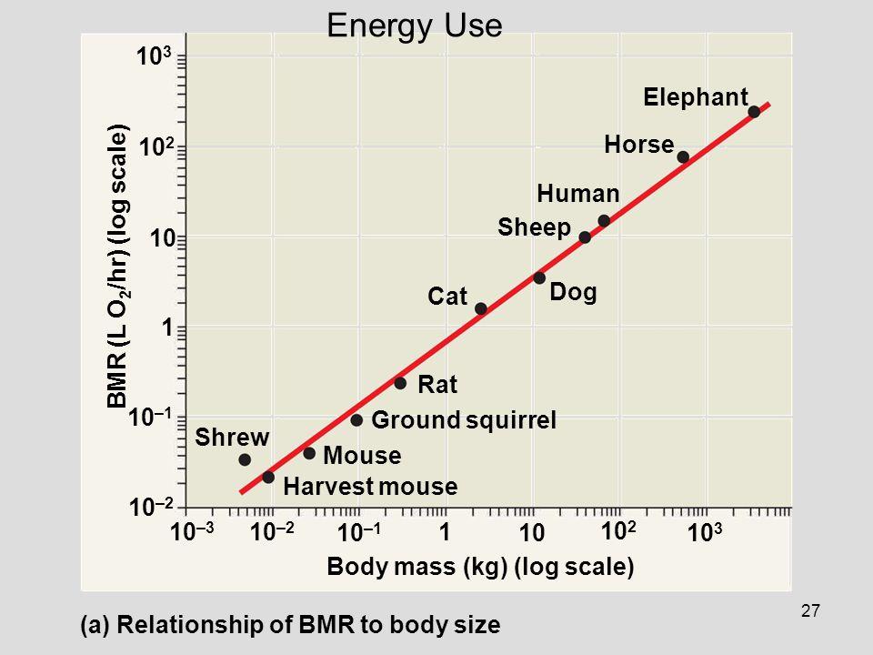 Energy Use 103 Elephant 102 Horse Human Sheep 10