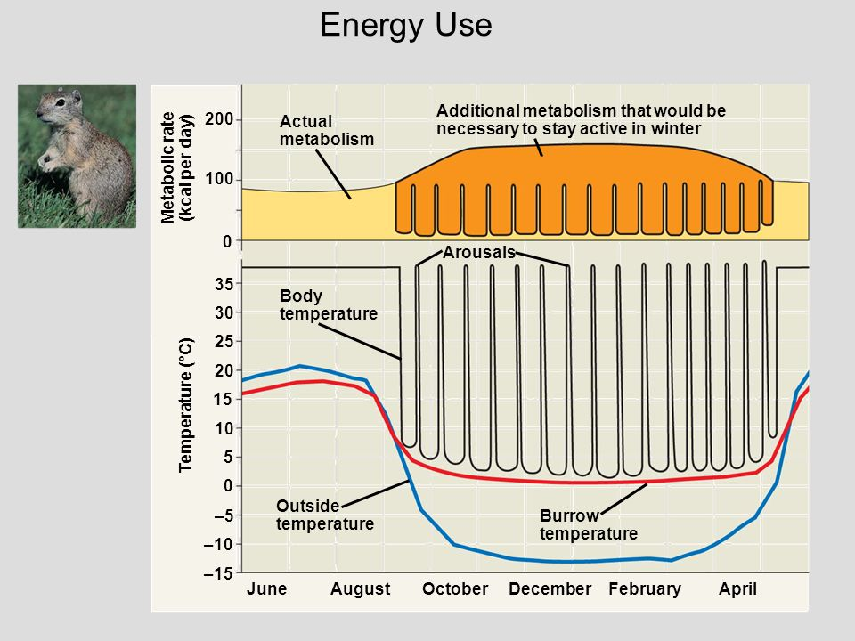 Energy Use Additional metabolism that would be