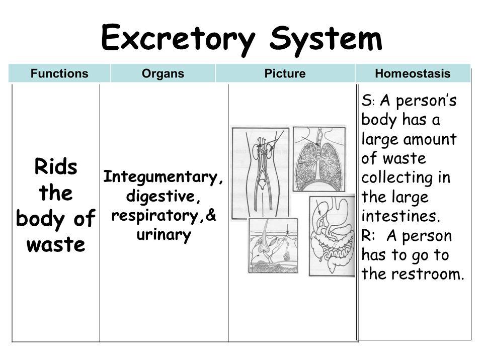Integumentary, digestive, respiratory,& urinary