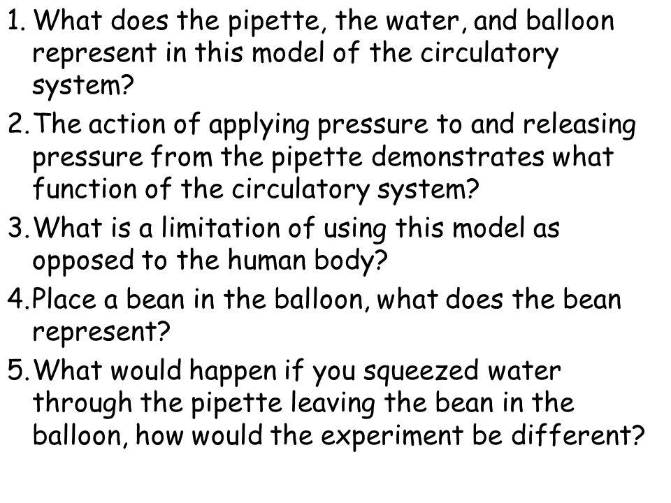 What does the pipette, the water, and balloon represent in this model of the circulatory system