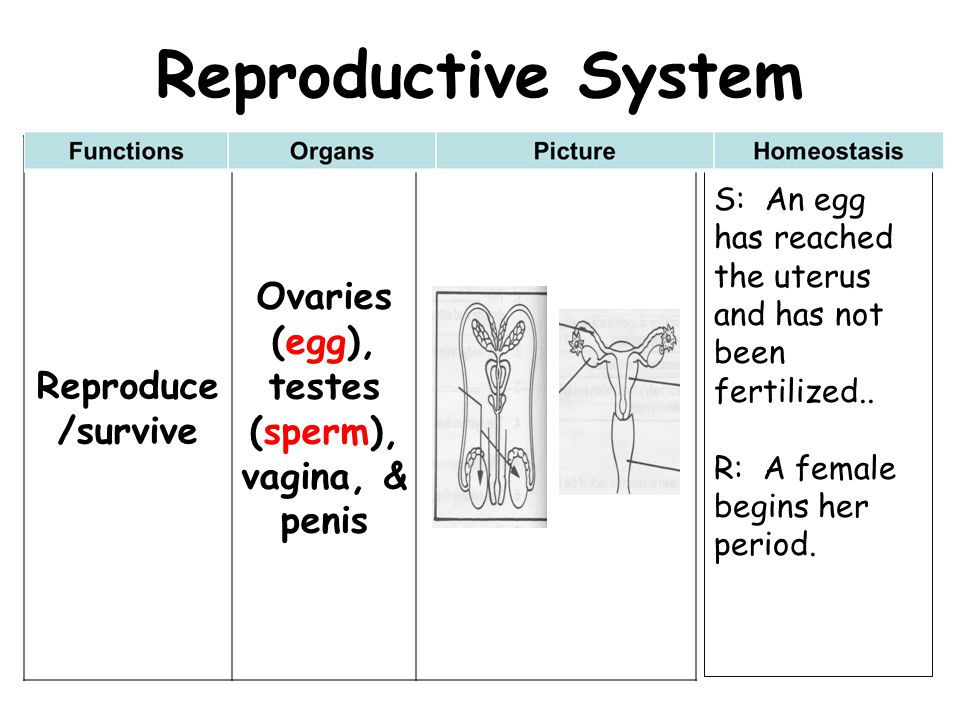 Ovaries (egg), testes (sperm), vagina, & penis