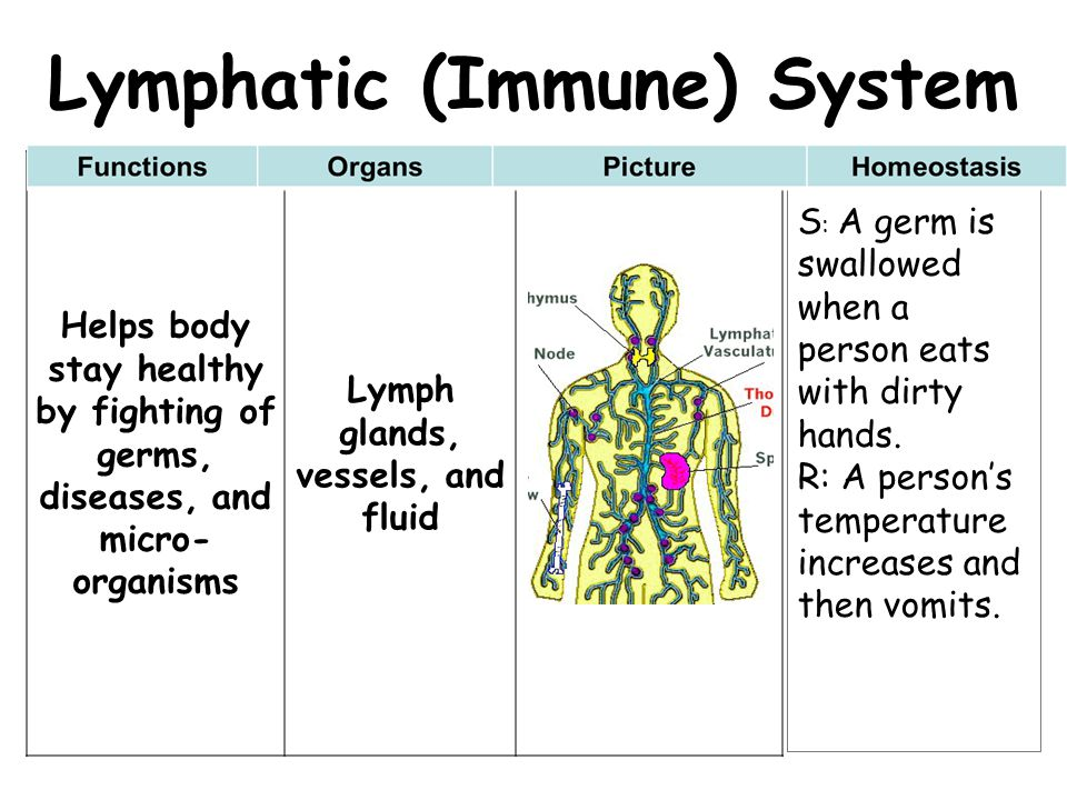 Lymphatic (Immune) System Lymph glands, vessels, and fluid