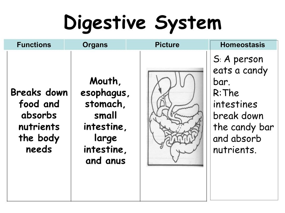 Digestive System Mouth, esophagus, stomach,
