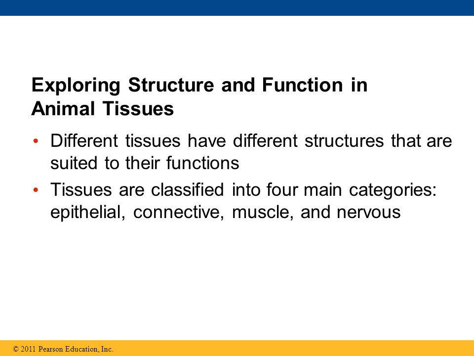Exploring Structure and Function in Animal Tissues