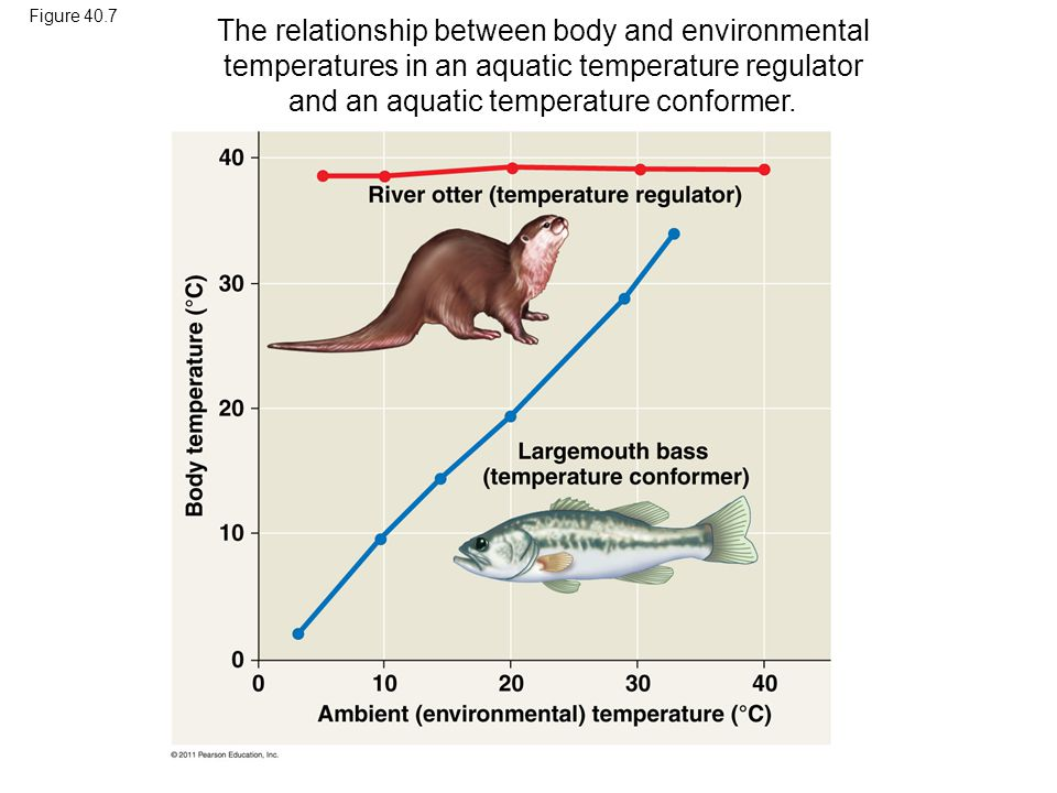 Figure 40.7 The relationship between body and environmental temperatures in an aquatic temperature regulator and an aquatic temperature conformer.