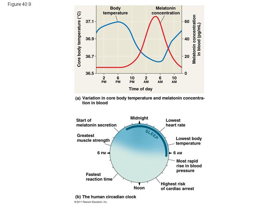 Figure 40.9 Figure 40.9 Human circadian rhythm. 40