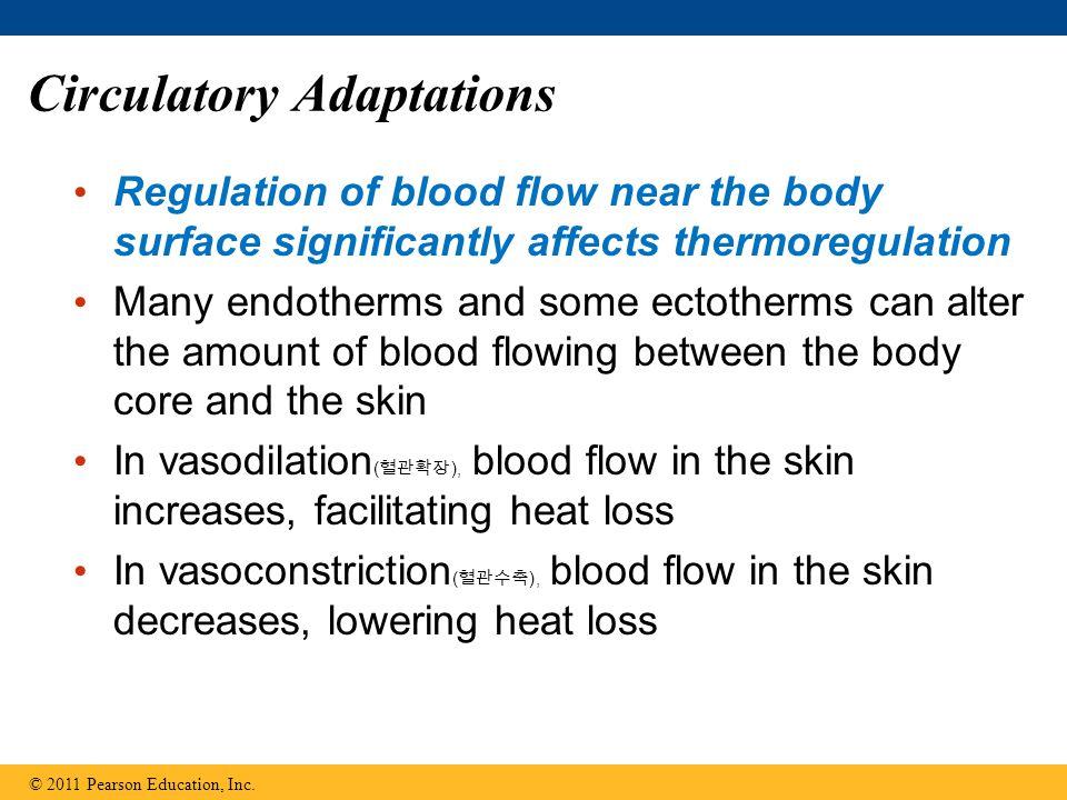 Circulatory Adaptations
