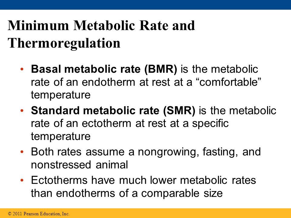Minimum Metabolic Rate and Thermoregulation