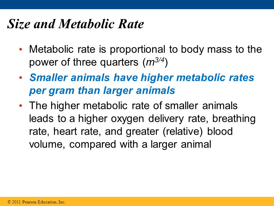 Size and Metabolic Rate