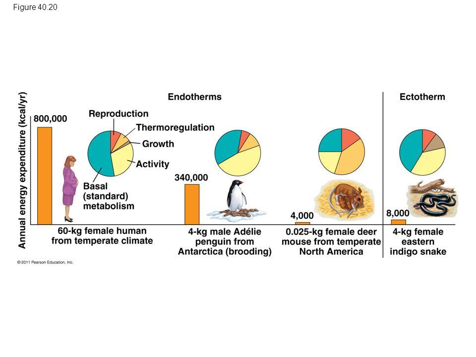 Figure 40.20 Figure 40.20 Energy budgets for four animals. 70