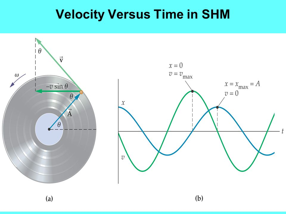 Velocity Versus Time in SHM