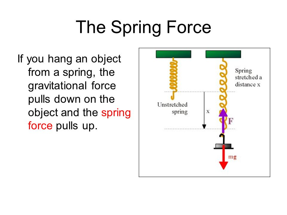 The Spring Force If you hang an object from a spring, the gravitational force pulls down on the object and the spring force pulls up.