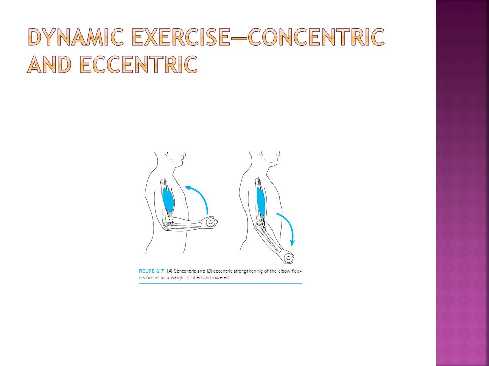 Dynamic Exercise—Concentric and Eccentric