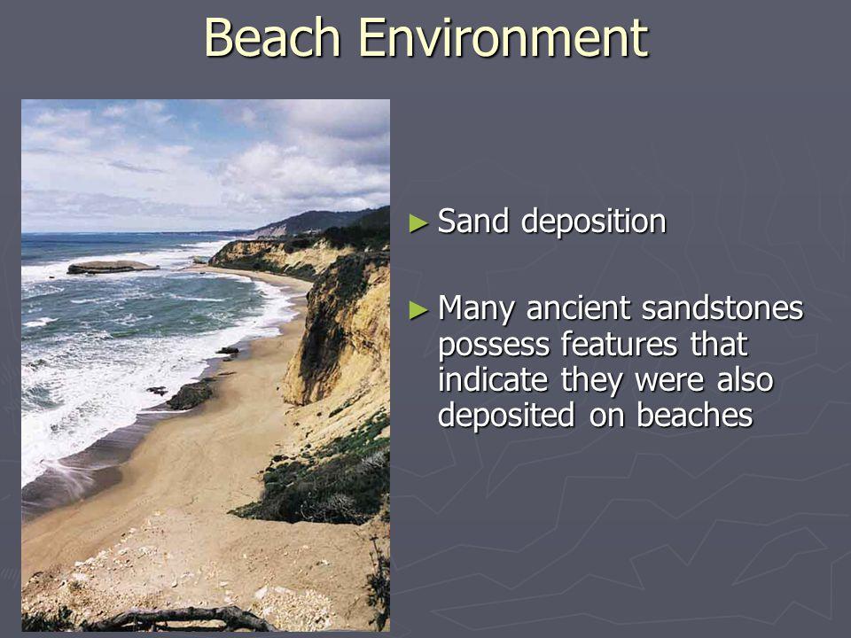 Beach Environment Sand deposition