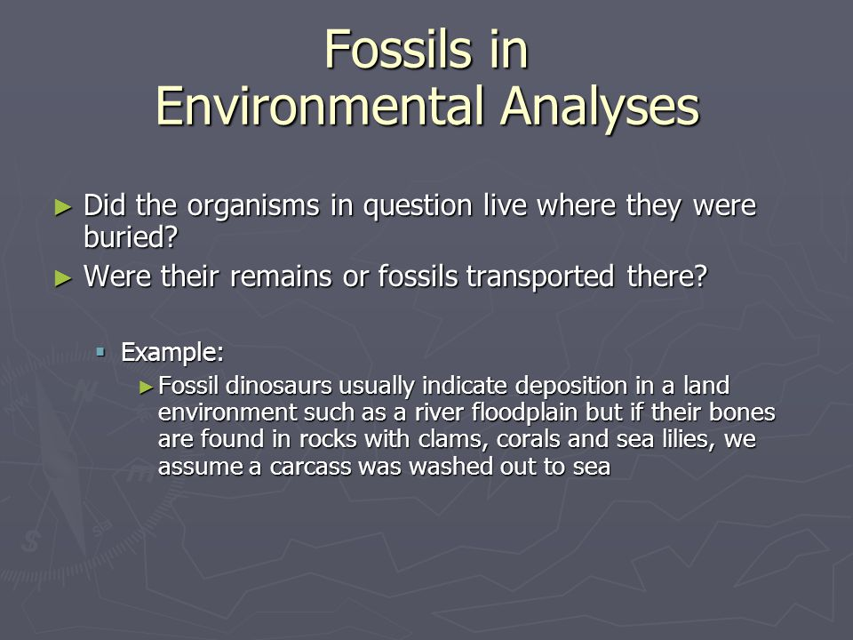 Fossils in Environmental Analyses