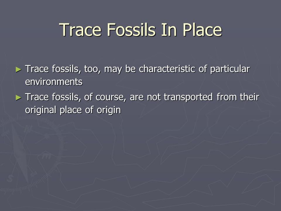 Trace Fossils In Place Trace fossils, too, may be characteristic of particular environments.