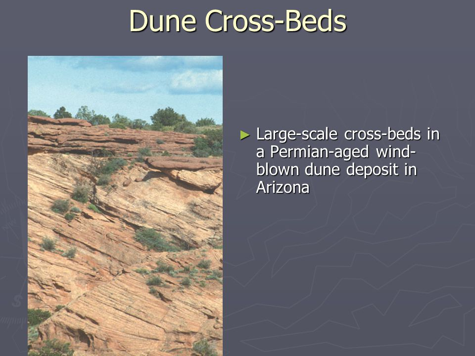 Dune Cross-Beds Large-scale cross-beds in a Permian-aged wind-blown dune deposit in Arizona