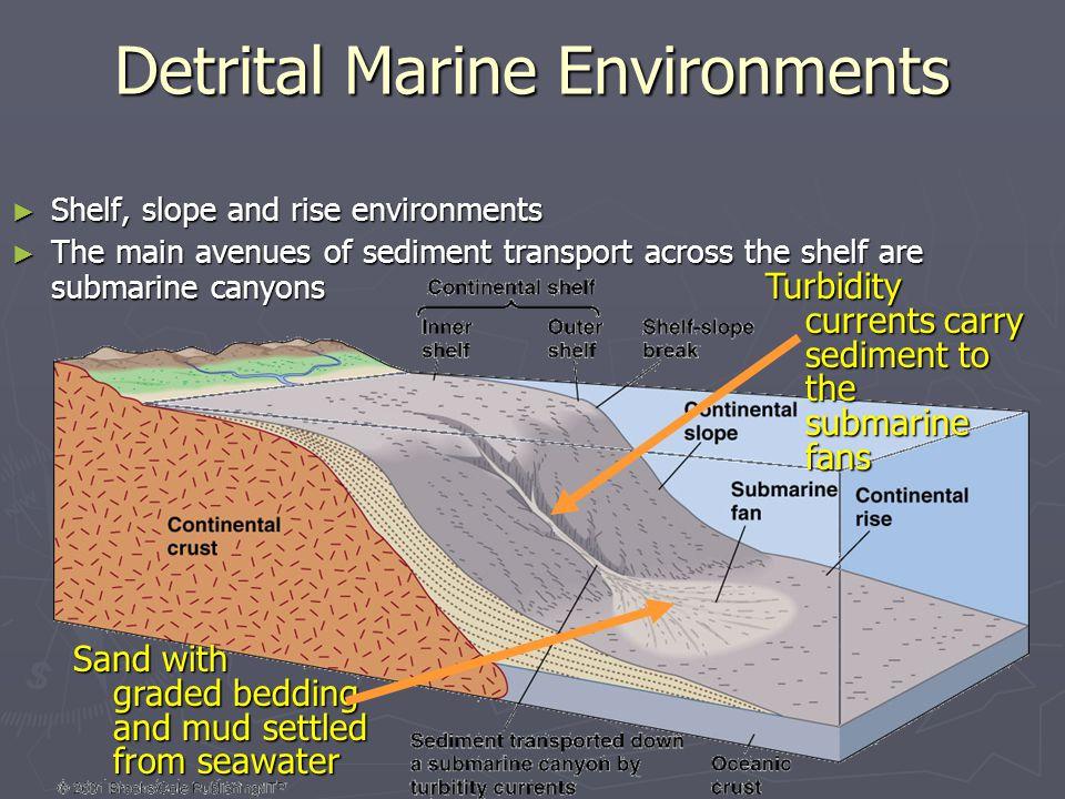Detrital Marine Environments