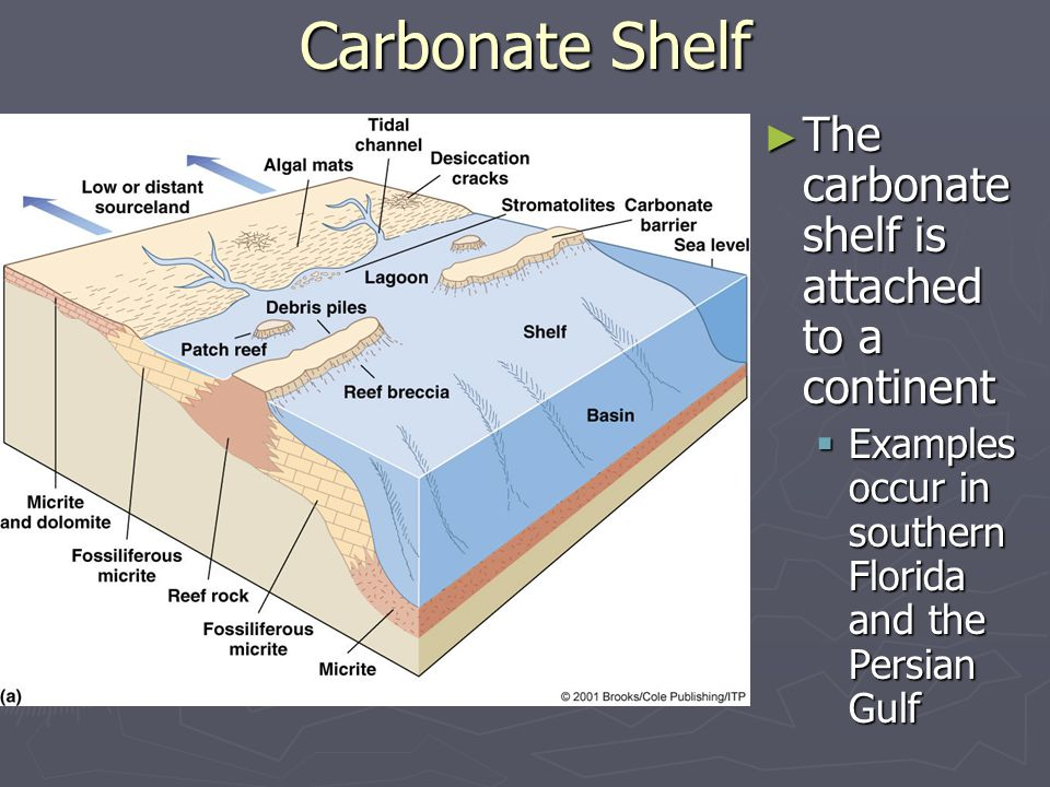 Carbonate Shelf The carbonate shelf is attached to a continent