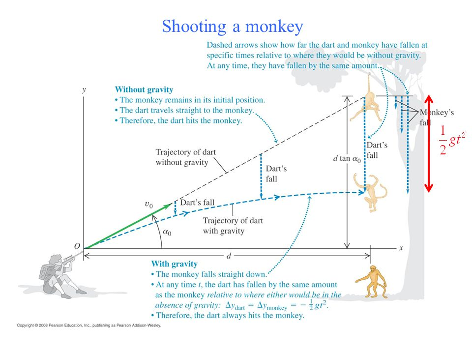 Shooting a monkey